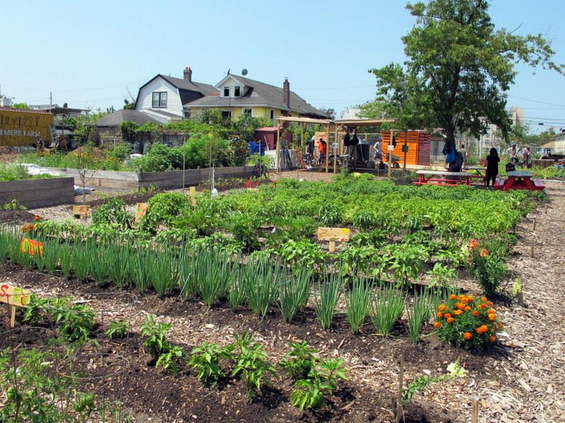 Edgemere Farm & The Healing Garden at Far Rock Farm   GrowNYC
