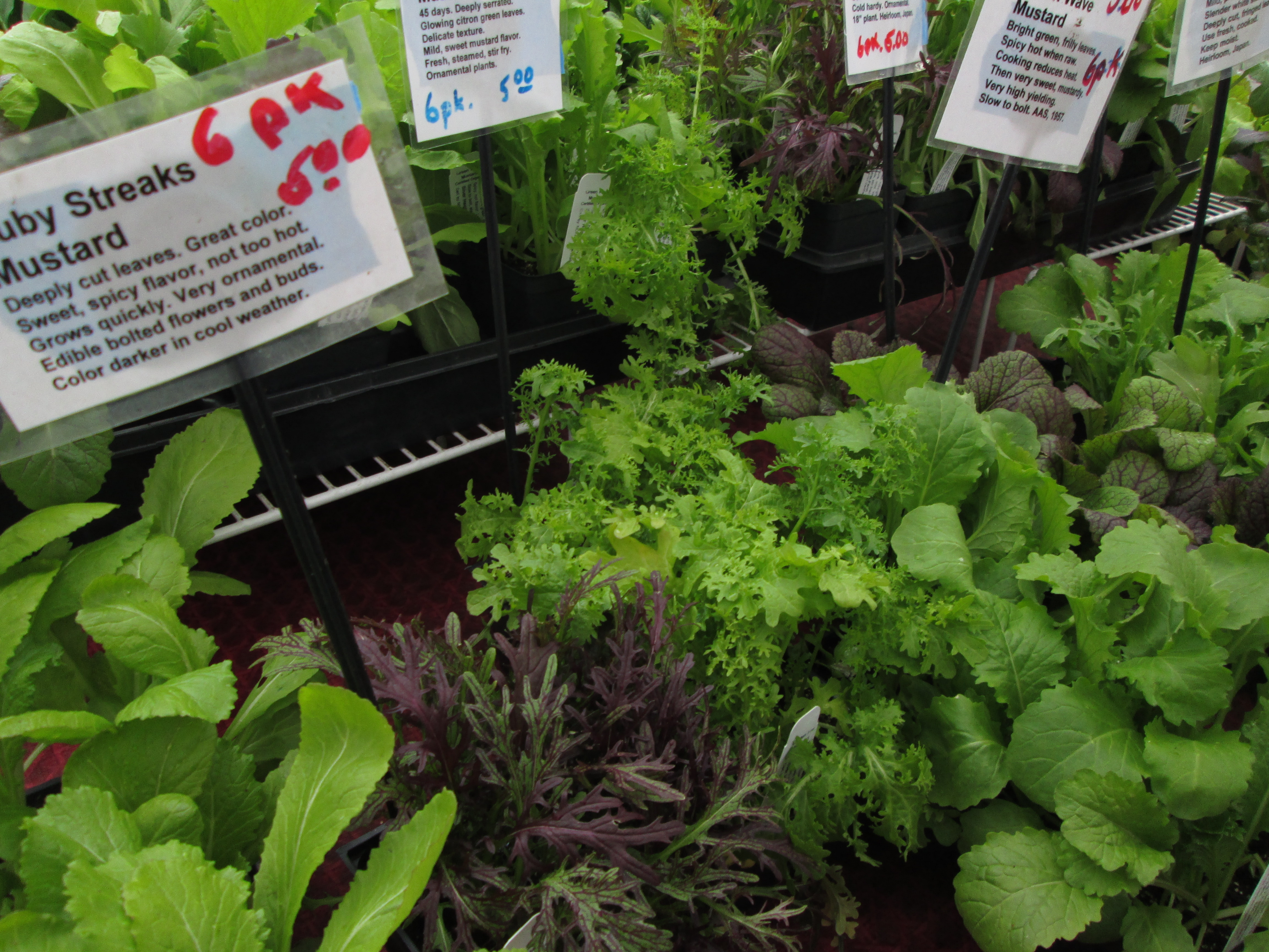 Spring Is Here And Its Time To Start Getting Your Backyard Window Sill Gardens Planted Greenmarket Producers Offer A Variety Of Plant Starts For